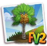 Coco De Mer Palm Tree