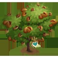 Heirloom Sweet Almond Tree