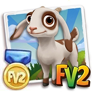 Prized Jamnapari Goat