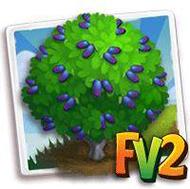 Sweetberry Honeysuckle Tree