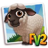 Baby Teeswatter Sheep