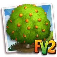 Fukushu Kumquat Tree