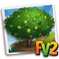 Brazilian Plum Tree