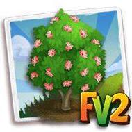 Pink Mimosa Tree
