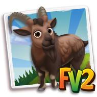 Bezoar Ibex
