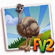Northern Emu