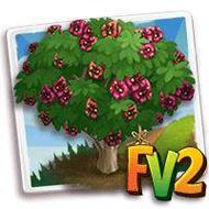 Heirloom African Kigelia Tree