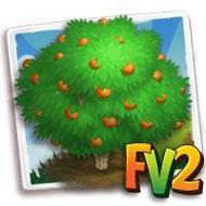 Mandarin Clementine Tree