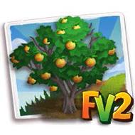 Briancon Apricot Tree