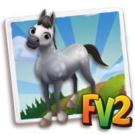Baby Grey Marwari Horse