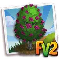 Chilean Hazel Tree