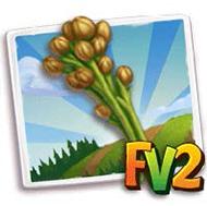Flax (produce)