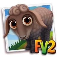 Baby Karakul Sheep