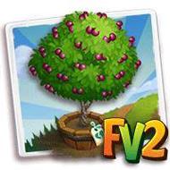 Elder Panamint Nectarine Tree