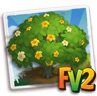 Perfume Flower Tree