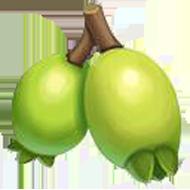 Malabar Plum