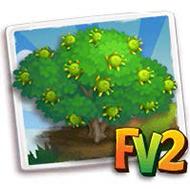 Mangrove Apple Tree