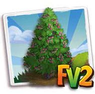 Spanish Fir Tree