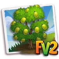 Sweet Fairchild Jackfruit Tree