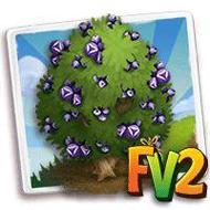 Heirloom Common Juniper Tree