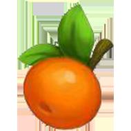 Nugget Apricot