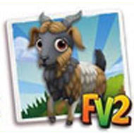 Majorera Goat