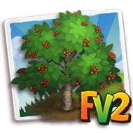European Wild Cherry Tree