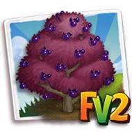 Virginia Bird Cherry Tree