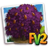 Weeping Purple Beech Tree