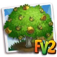 Heirloom Paradise Nut Tree