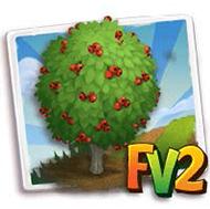 Midland Hawthorn Tree
