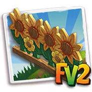Sunflower Garden Display