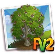 Wych Elm Tree