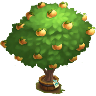 Elder Poppy Apricot Tree