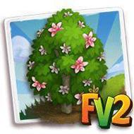 Heirloom Yulan Magnolia Tree