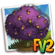 Purple Giant Filbert Tree