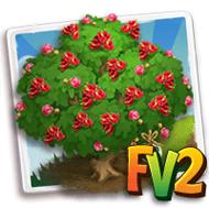 Heirloom Red Cassia Tree