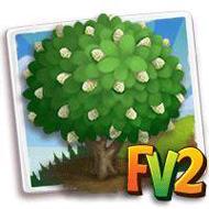 Noni Tree