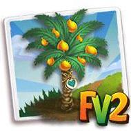 Heirloom African Palm Oil Tree