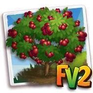 Heirloom Mirabelle Plum Ruby Tree
