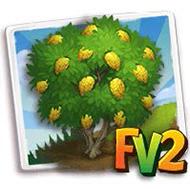 Corsican Citron Tree