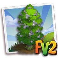Swamp Cypress Tree
