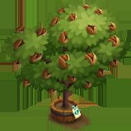 Elder Sweet Almond Tree