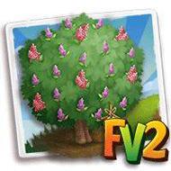 Heirloom Pink Vitex Tree