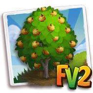 Nashi Pear Tree