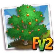 Royal Rainier Cherry Tree