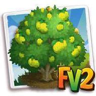 Heirloom Ponderosa Lemon Tree