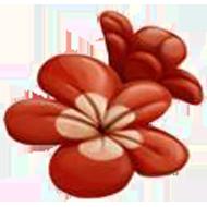 Crimson Cloud Hawthorn