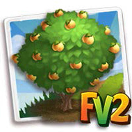 Poppy Apricot Tree