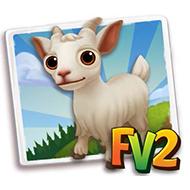 Baby Girgentana Goat